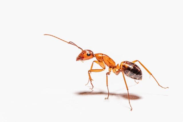 Verovali Ili Ne – Mravi