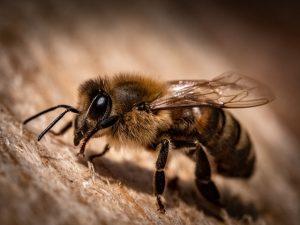 Pčela Verovali Ili Ne