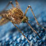 """Koronavirus: sprej za komarce može """"ubiti"""" vrstu koji prouzrokuje Covid-19"""
