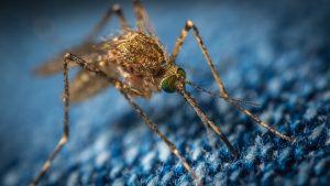 COVID - 19 mosquito