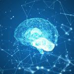 Verovali Ili Ne – Mozak