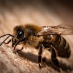 Verovali Ili Ne – Pčele