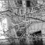 Verovali Ili Ne – Drvo na kome rastu špagete