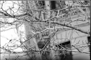 Drvo špageta