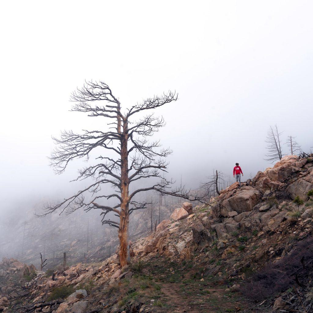 Grčka Požari Šume